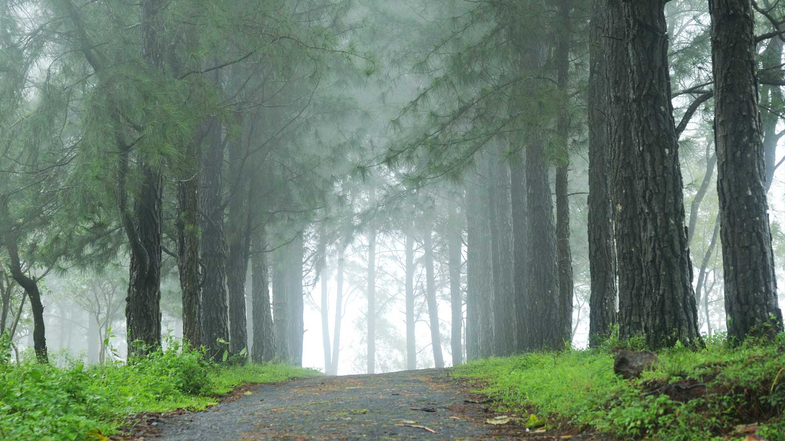 Enjoy Tour packages in  Vagamon